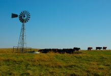 Cattle windmill
