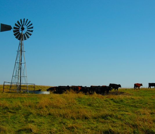 Cattle windmill